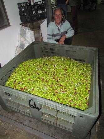 olive picking haul