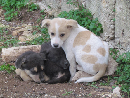 olive picking puppies